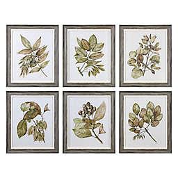 Uttermost Seedlings 20-Inch x 24-Inch Wall Art (Set of 6)