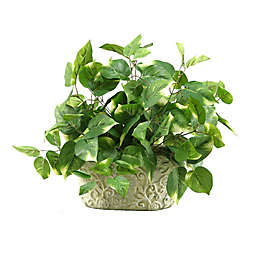 D&W Silks Pothos Bush in Oblong Ceramic Planter