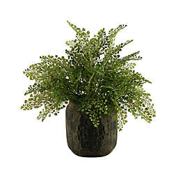 D&W Silks Flatiron Fern in Round Ceramic Planter