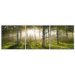 Elementem Photography 28-Inch x 28-Inch Photographic Wall Art of Enchanted Forest