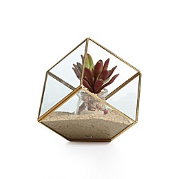 Danya B.Cube Brass and Glass Terrarium