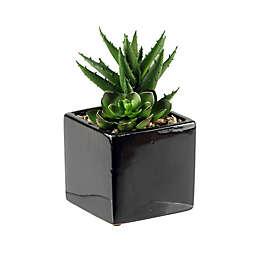 D&W Silks Mini Echeveria and Aloe in Square Ceramic Planter