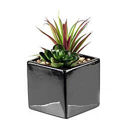 D&W Silks Mini Succulent and Echeveria in Square Ceramic Planter