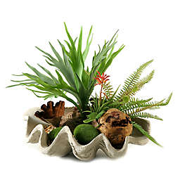 D&W Silks Staghorn Fern and Succulents in Clam Shell