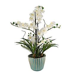 D&W Silks Cream Orchids in Round Ceramic Planter