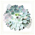 PTM Images  Succulents I  14.5-Inch x 14.5-Inch Print Wall Art