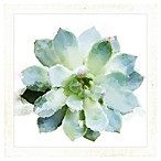 PTM Images  Succulents II  14.5-Inch x 14.5-Inch Print Wall Art