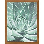 PTM Images  Spiky Succulent  12-Inch x 16-Inch Print Wall Art