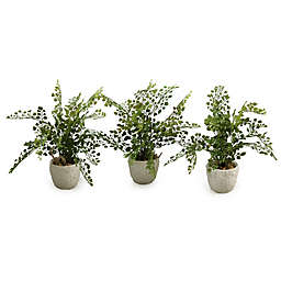 D&W Silks Maiden Hair Fern in Coral Reef Vases (Set of 3)