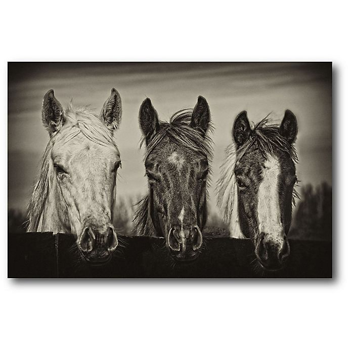 Alternate image 1 for Courtside Market Three Amigos 20-Inch x 16-Inch Canvas Wall Art
