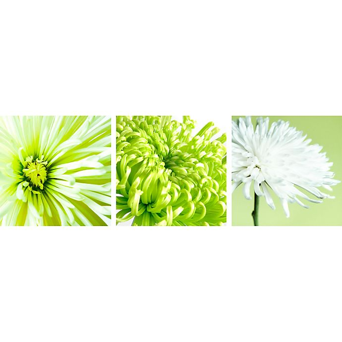 Alternate image 1 for Arthouse Chrysanthemum Wall Canvas in Lime (Set of 3)