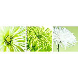 Arthouse Chrysanthemum Wall Canvas in Lime (Set of 3)