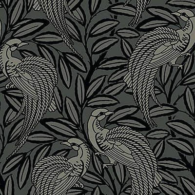 A Shade Wilder Tailfeather Wallpaper