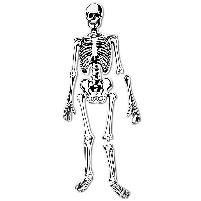 Alternate image 1 for Learning Resources® Skeleton 15-Piece Floor Puzzle