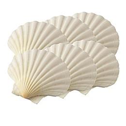 Harold Import Co. Natural Baking Shells (Set of 6)