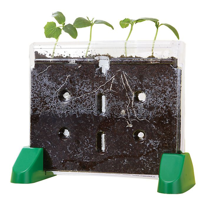 Alternate image 1 for Educational Insights® Sprout and Grow Window