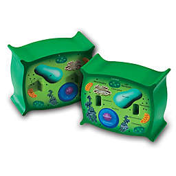 Learning Resources®  Cross Section Plant Cell Model