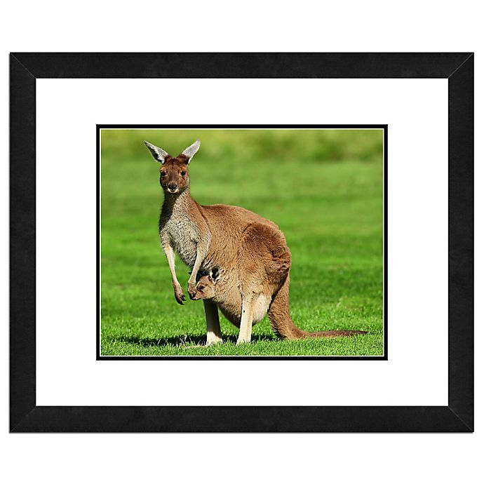 Alternate image 1 for Photo File Kangaroo 18-Inch x 22-Inch Framed Photo Wall Art