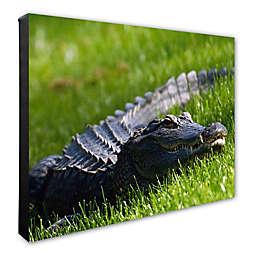 Trademark Fine Art Alligator 16-Inch x 20-Inch Photo Canvas Wall Art