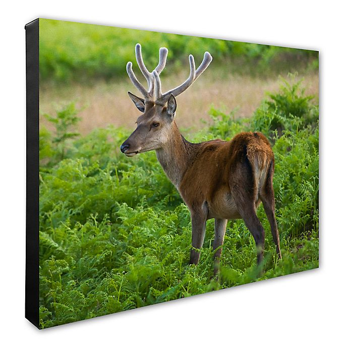 Alternate image 1 for Photo File, Inc. Deer 20-Inch x 24-Inch Photo Canvas Wall Art
