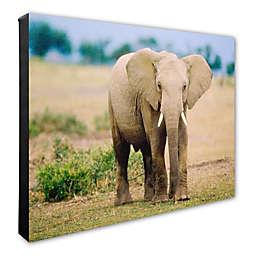 Lone Elephant 16-Inch x 20-Inch Photo Canvas Wall Art