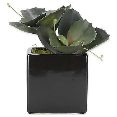 D&W Silks Wild Succulent in Ceramic Planter