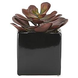 D&W Silks Succulent in Ceramic Planter Collection