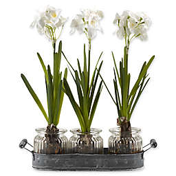 D&W Silks Paperwhite Bulbs in Glass Jars on Tray (Set of 3)