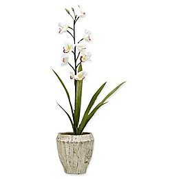 D&W Silks Cream Cymbidium Orchids in Cement Planter