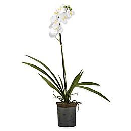 D&W Silks White Vanda Orchid in Rustic Ceramic Planter