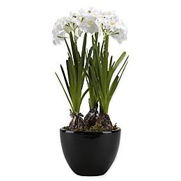 D&W Silks Paperwhite Bulbs in Black Ceramic Planter