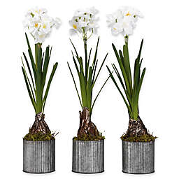 D&W Silks Paperwhite Bulbs in Grey Tin Planters (Set of 3)