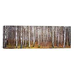 "iCanvas ""Silver Birch Trees in a Forest"" Extra-Deep 60-Inch x 20-Inch Canvas Wall Art"
