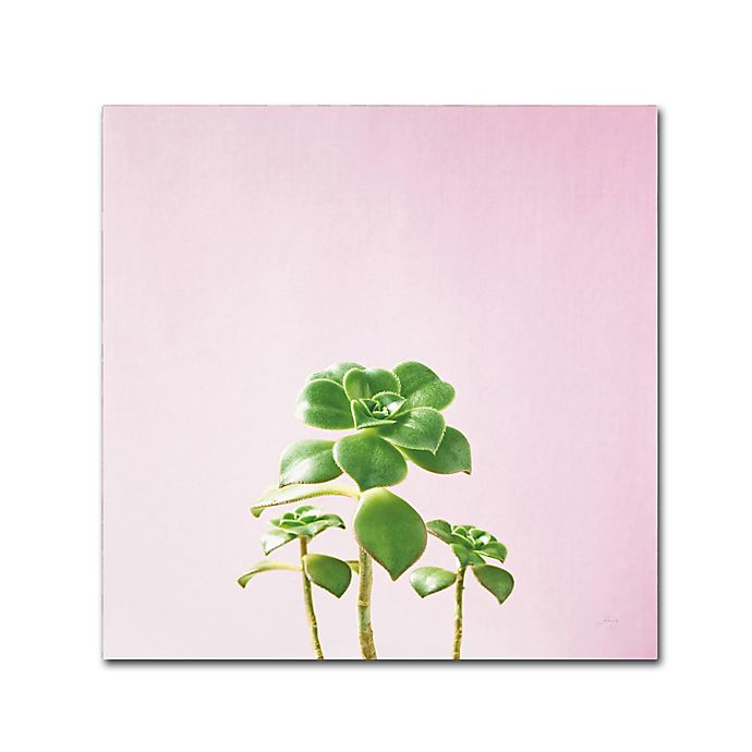 Alternate image 1 for Marmont Hill Succulent Simple 18-Inch Square Canvas Wall Art