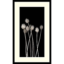 Amanti Art Dried Up 30-Inch x 18-Inch Framed Wall Art