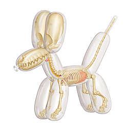 4D Master® Funny Anatomy Balloon Dog