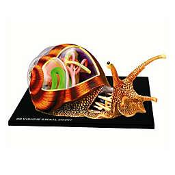 4D Master® Vision Snail Anatomy Model