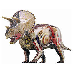 4D Master® 4D Vision Triceratops Anatomy Model