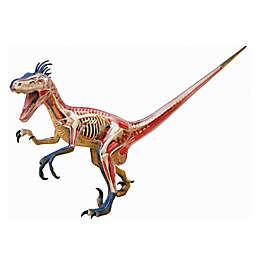 4D Master® 4D Vision Velociraptor Anatomy Model
