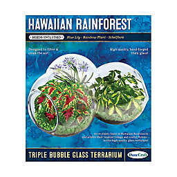 DuneCraft Hawaiian Rainforest Triple Bubble Glass Terrarium
