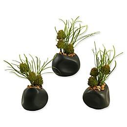 D&W Silks 7-Piece Mini Aloes in Glass Jars and Metal Tray Set