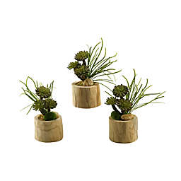 D&W Silks Echeveria, Aloe and Succulents in Round Tin Planter