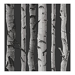 Fine Decor Distinctive Birch Tree Wallpaper in Black