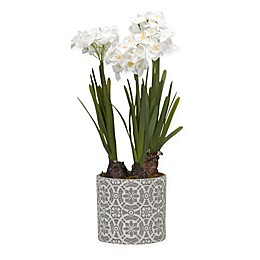 D&W Silks Paperwhite Bulbs in Round Embossed Cement Planter