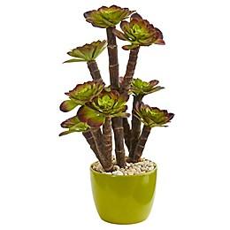 Nearly Natural 20-Inch Echeveria Succulent in Green Ceramic Planter
