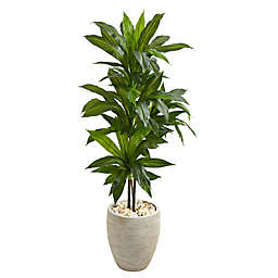 Nearly Natural 4-Foot Real Touch Dracaena in Sand Textured Oval Planter
