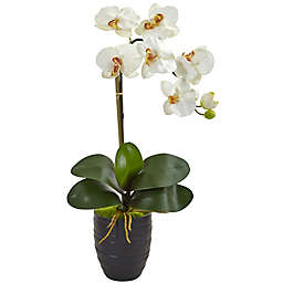 Nearly Natural 22.5-Inch Phalaenopsis Orchid Artificial Arrangement