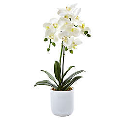 Nearly Natural 20-Inch Phalaenopsis Orchid with Frosted Glass Vase