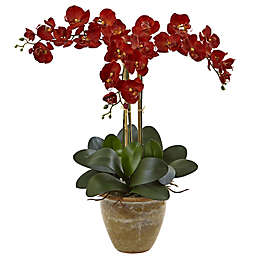 Nearly Natural 27-Inch Triple Phalaenopsis Orchid in Glazed Clay Pot