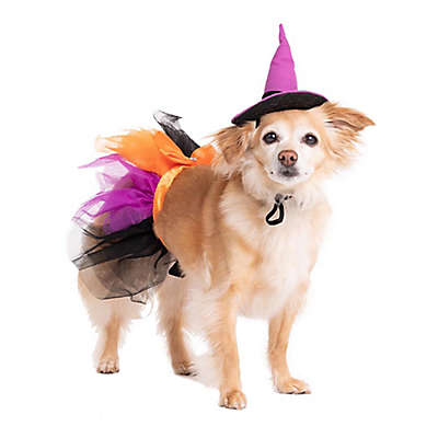 Pet Halloween Witch Costume